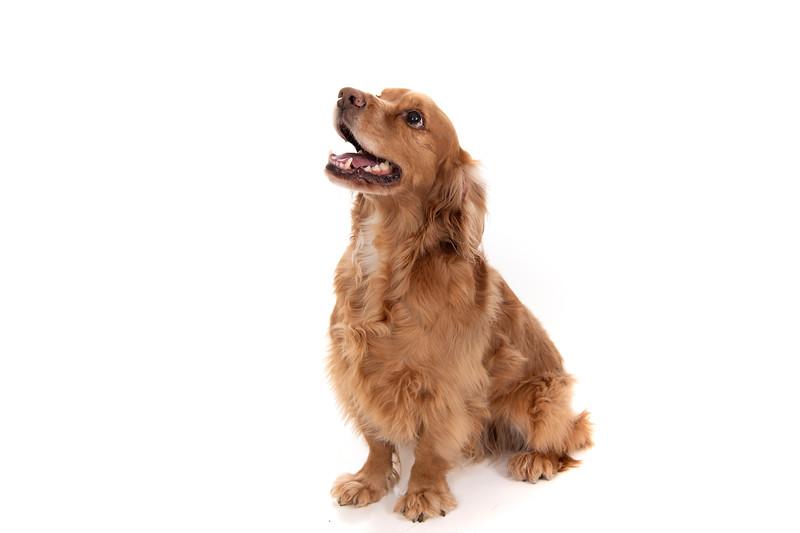 Doggies_024