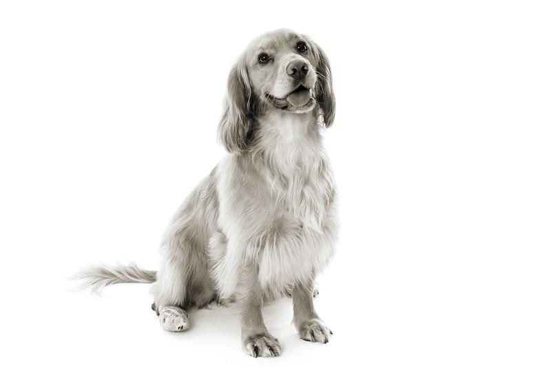 Doggies_010 copy
