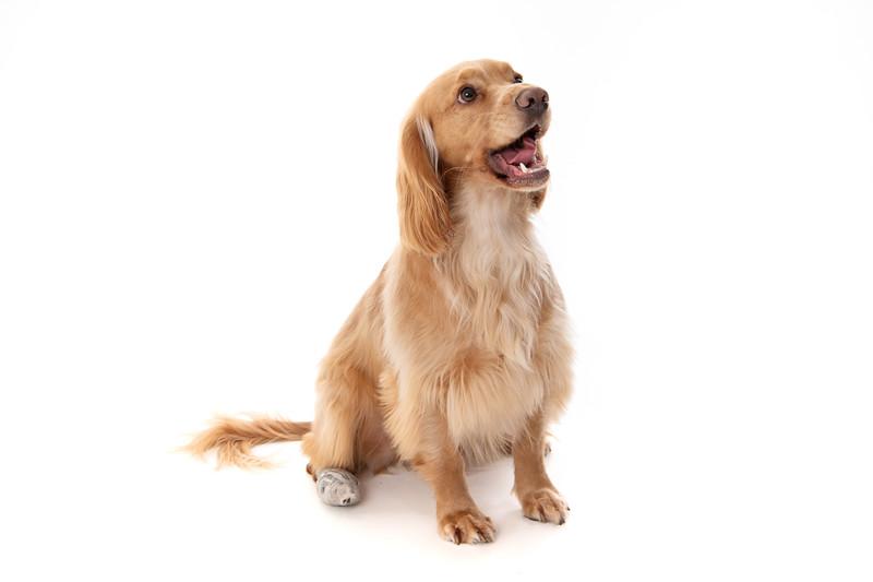 Doggies_007
