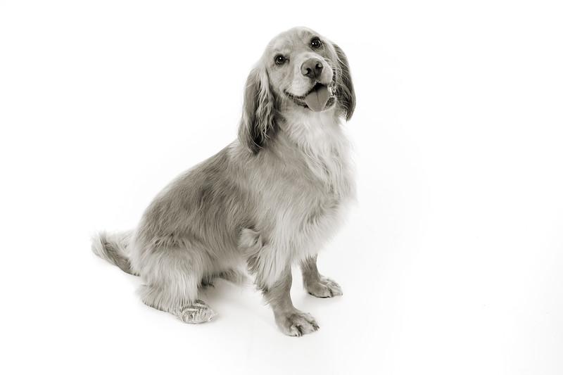 Doggies_002 copy