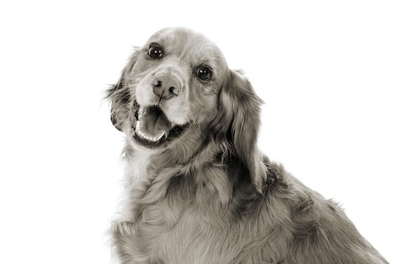 Doggies_023 copy