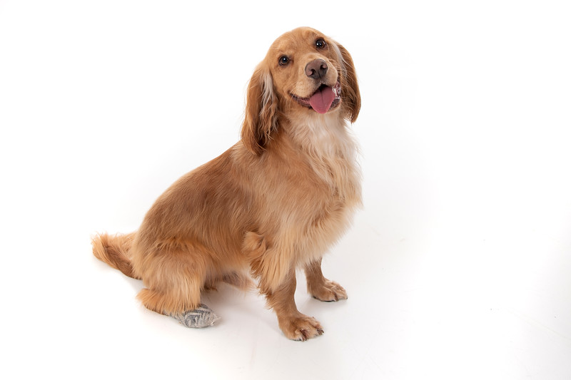 Doggies_002