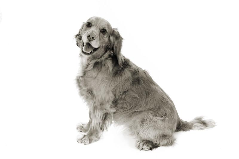 Doggies_022 copy