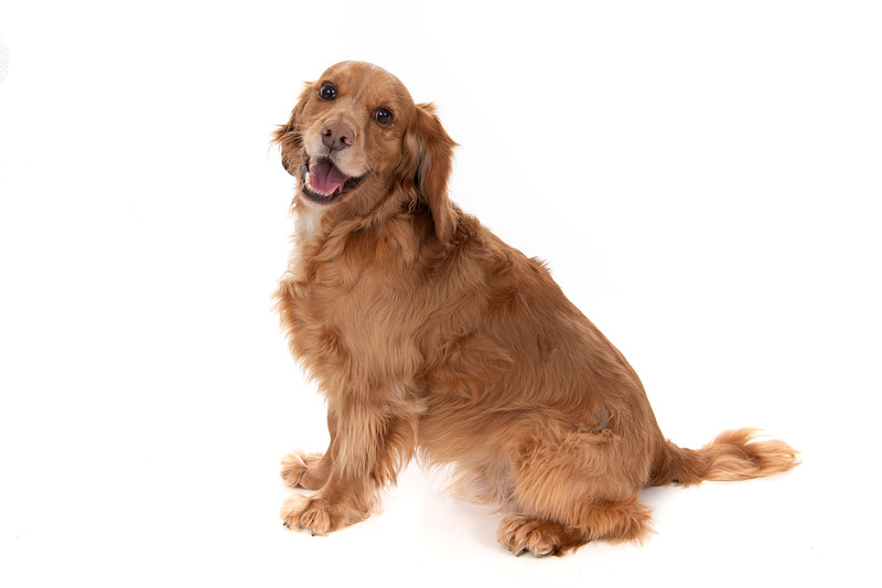 Doggies_022