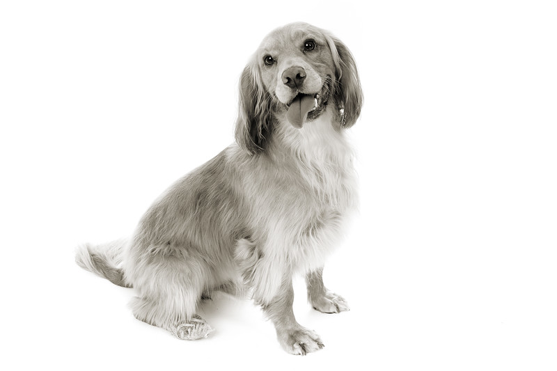 Doggies_004 copy