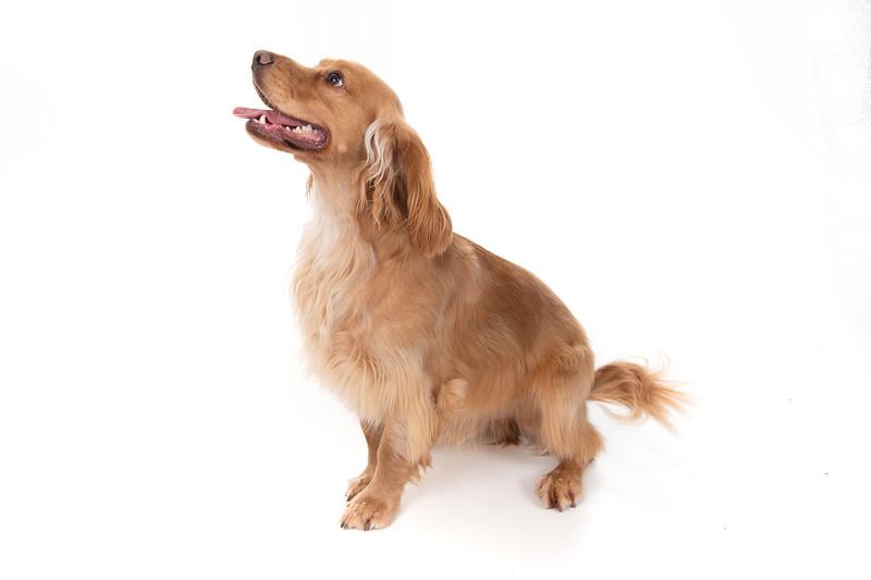 Doggies_013