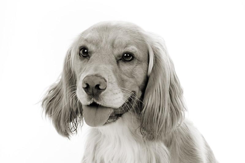 Doggies_016 copy
