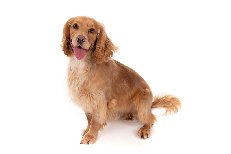 Doggies_014