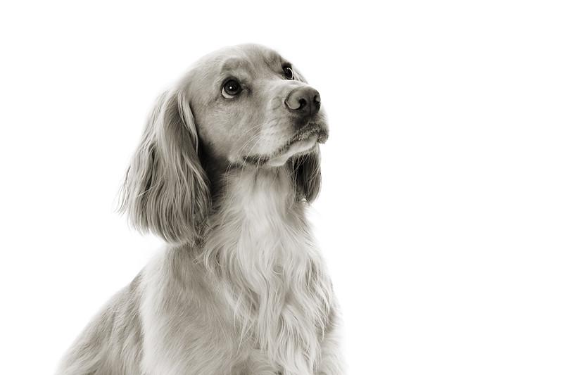 Doggies_009 copy