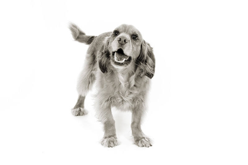 Doggies_019 copy