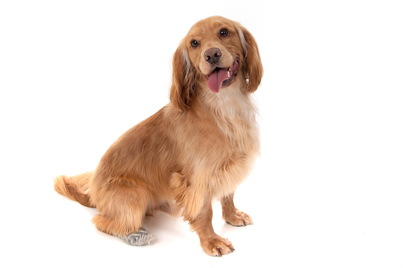 Doggies_004