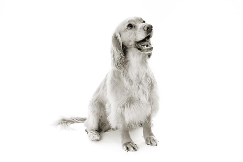 Doggies_007 copy