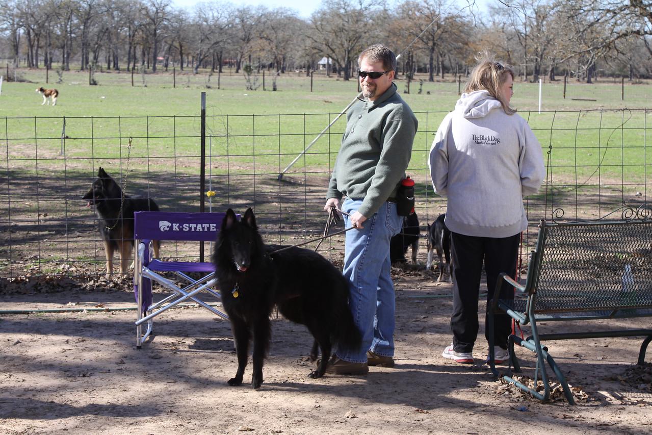IMG_7347  Blitzen, a Belgian Sheepdog