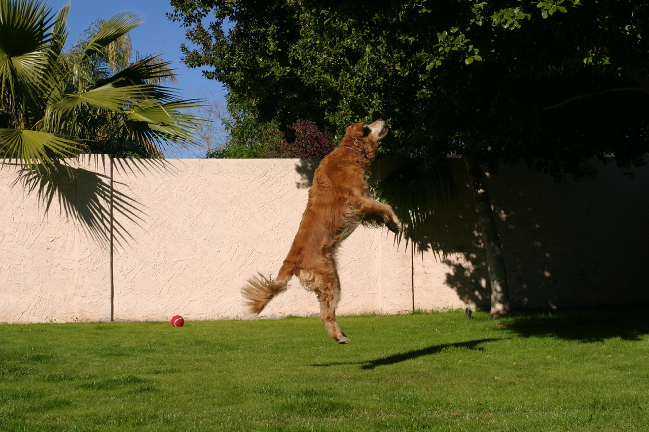 Bailey makes the big leap