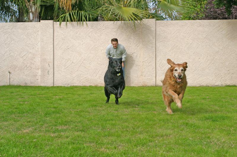 Kona chases Bailey