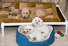 Holly loves her bed, her chewies and her Maltese friends.  She is twelve weeks old and weighs twenty pounds.