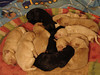 MISTY'S LITTER - Image provided by heather Goins