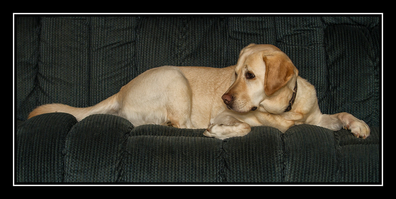 IMAGE: https://photos.smugmug.com/Pets/Holly-Doodle/i-dnVL5vn/0/5b427737/X2/Shadow%20on%20couch%2001-X2.jpg