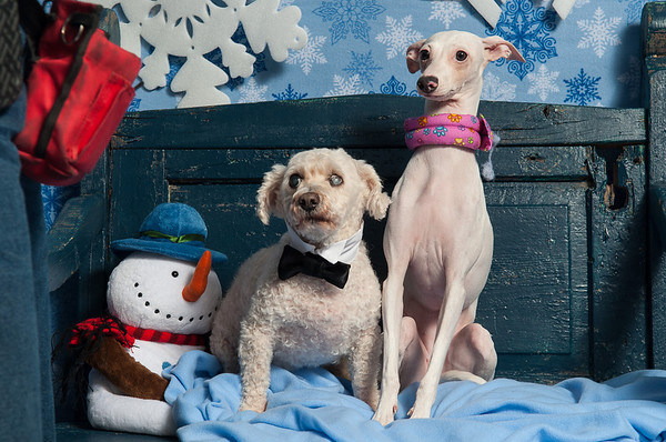Home Fur the Holidays