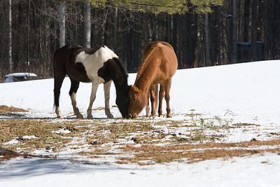 horses_7284