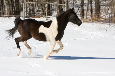 horses_7035