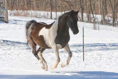 horses_7031