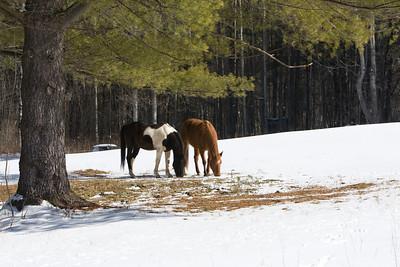 horses_7279