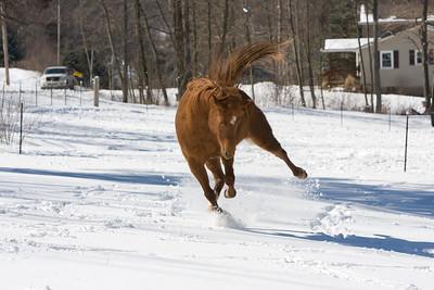 horses_7098