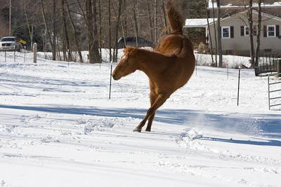 horses_7095