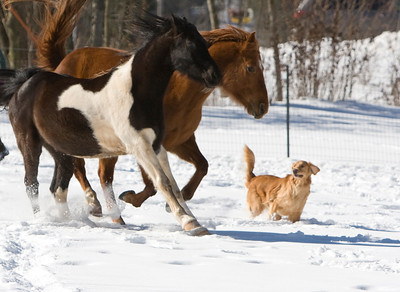 horses_7188