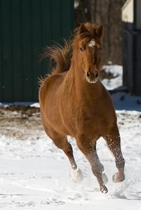 horses_7194