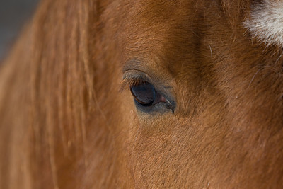 horses_7163
