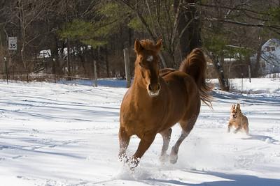 horses_7102