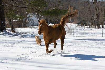 horses_7101