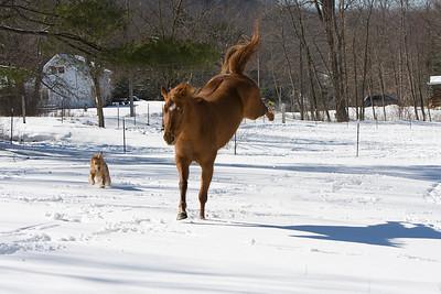 horses_7100