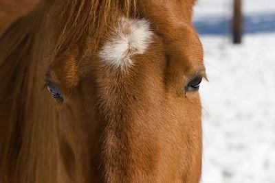 horses_7126