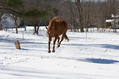 horses_7099