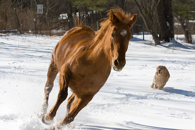 horses_7103