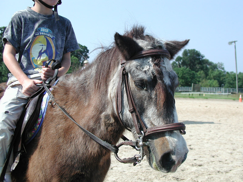 danny 43y.o. shetland pony