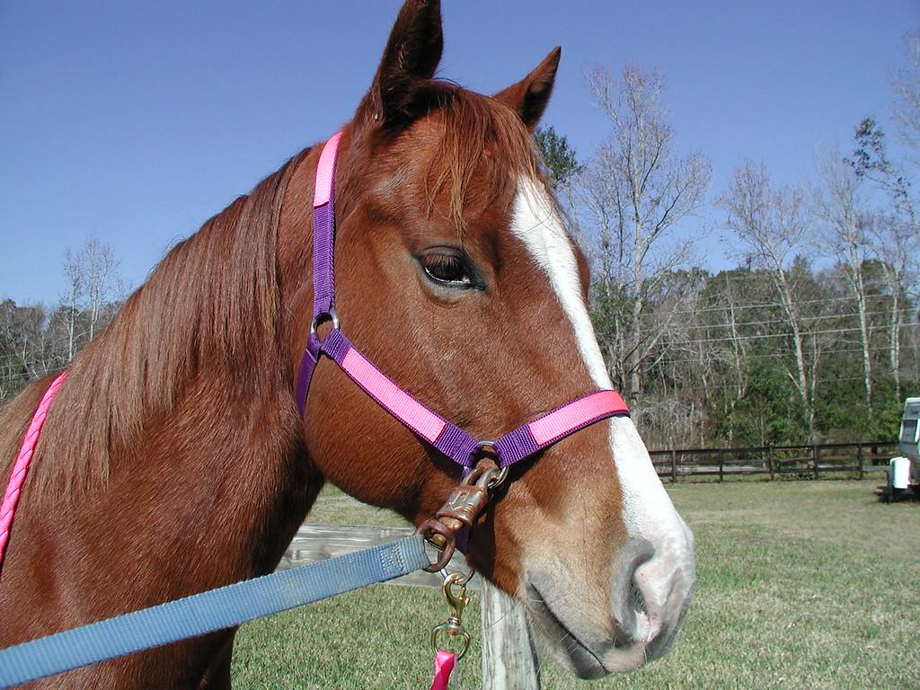 my horse spanky