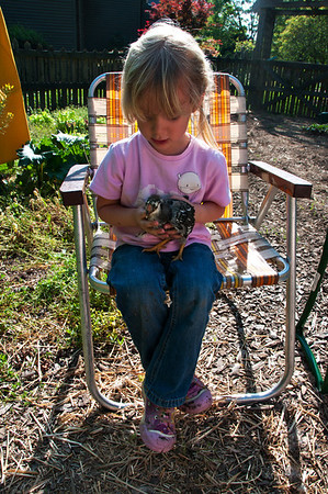 This has been such a fun experience for my grand daughter Thalia and me.  From day one she has been enjoying becoming friends with the chicks.