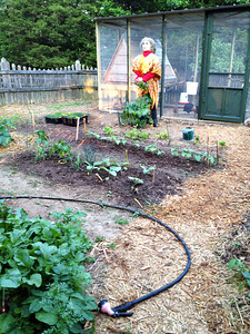 The garden is coming along, but not ready for the girls. I decided that I needed to find light weight fencing that would protect my crops.