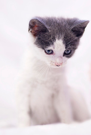 Humane Society --Petfinder June 2012