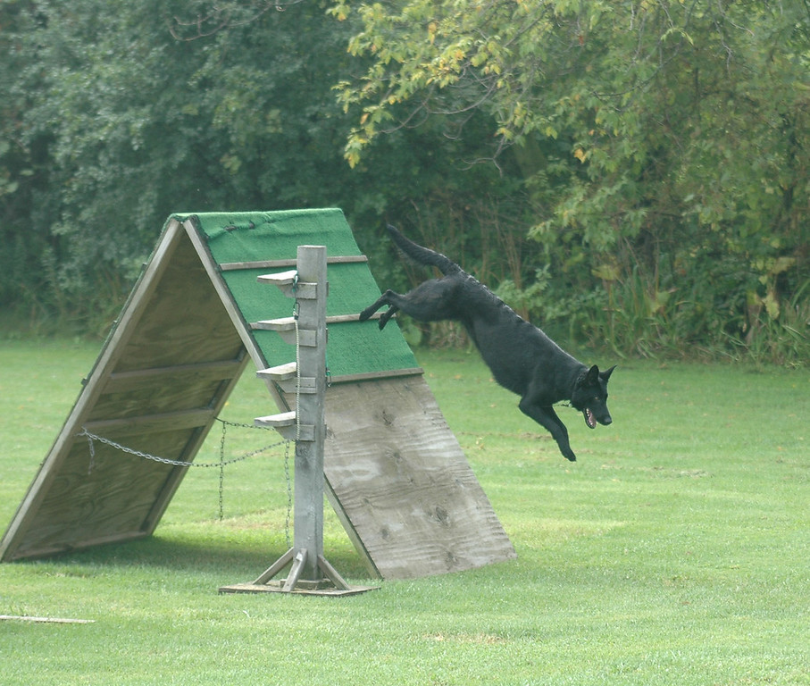 josie, retrieve over the wall