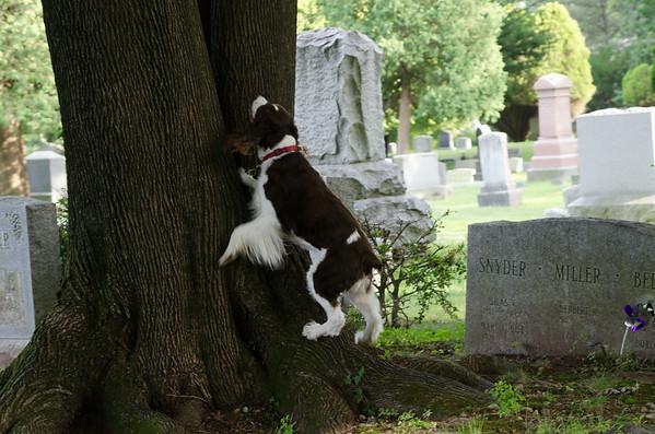 Hope Climbing Tree