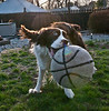 The bigger the ball, the happier the dog!