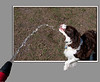 Watering The Dog