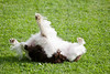 Hope having a happy roll in the grass