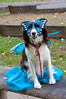 Hope in costume for the Howl'oween Dog Parade