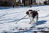 A Dog snd Her Stick